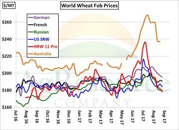 wheat 8-28