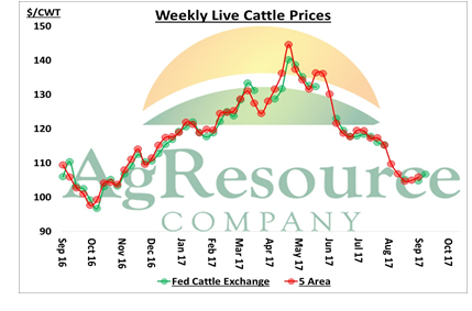 Cattle Called Firm on Higher Cash Trade Hope